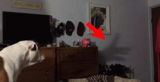 Мережу підкорило відео з реакцією пса на театр тіней