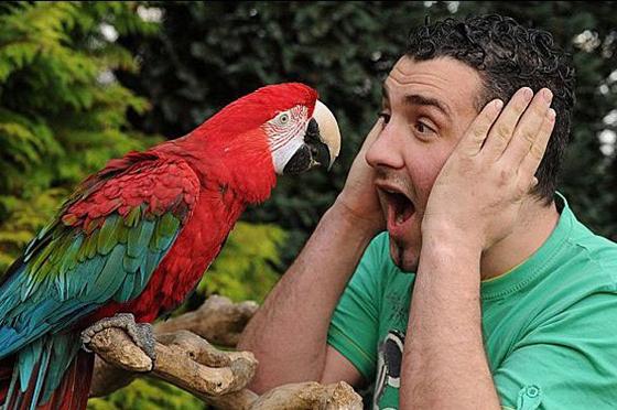 Сусіди викликали поліцію через сварку чоловіка з папугою
