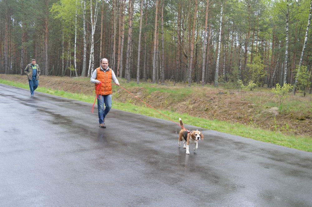 На Волині вперше відбулись випробування мисливських собак рангу САСТ по кров'яному сліду