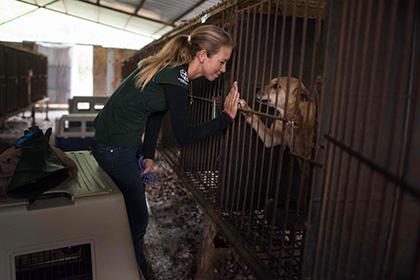 На м'ясній фермі в Південній Кореї волонтери врятували від вірної смерті 200 собак
