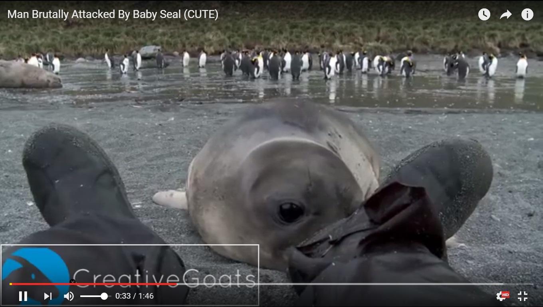 Мережу підкорює відео з морським слоненям, яке досліджує черевики лежачої на землі людини