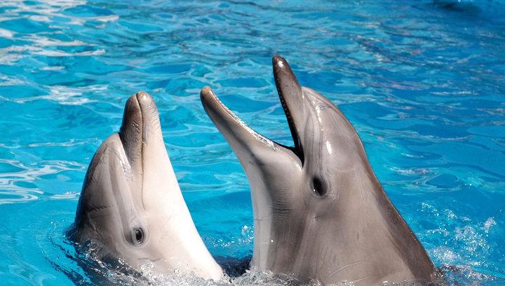 У Росії дельфінів навчили розфарбовувати крашанки
