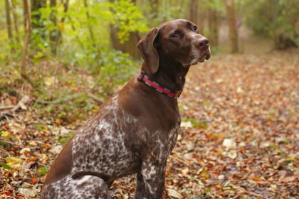 У США зниклого 10 років тому пса повернули господині