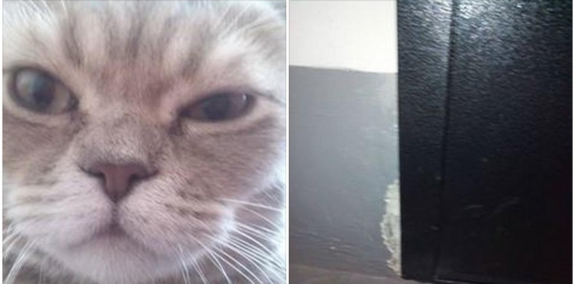 У Росії кіт змусив людей викликати ОМОН