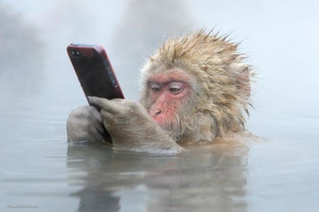 У Китаї мавпочка відібрала смартфон у туристки (відео)