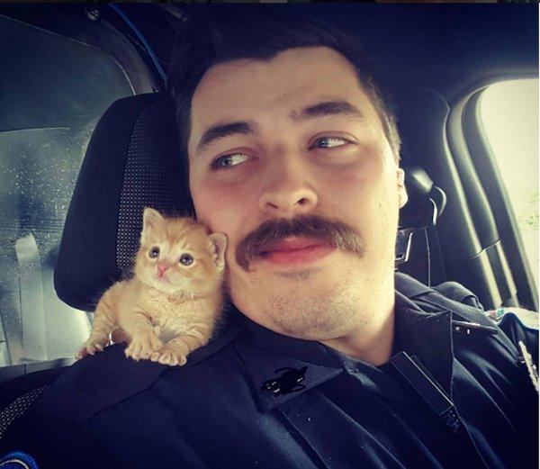 У США поліцейський взяв у напарники бездомне кошеня
