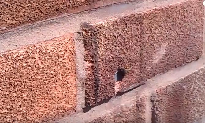 У Мережі з'явилося цікаве відео про те, як маленька бджола дістає цвях із стіни
