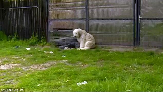 У Румунії собака п'ять років сидить біля будинку померлого господаря (відео)