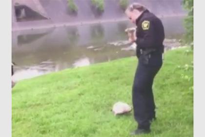 У США гуска попросила поліцейського врятувати її дитинча
