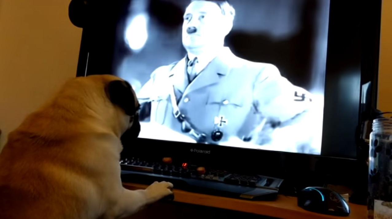 У Шотландії заарештували блогера, який навчив собаку нацистському привітанню