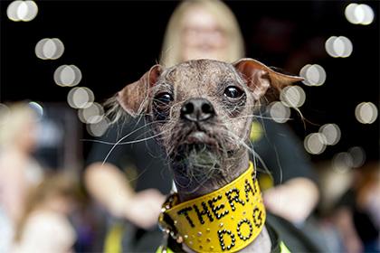 Найпотворніший у світі пес отримав нагороду за героїзм