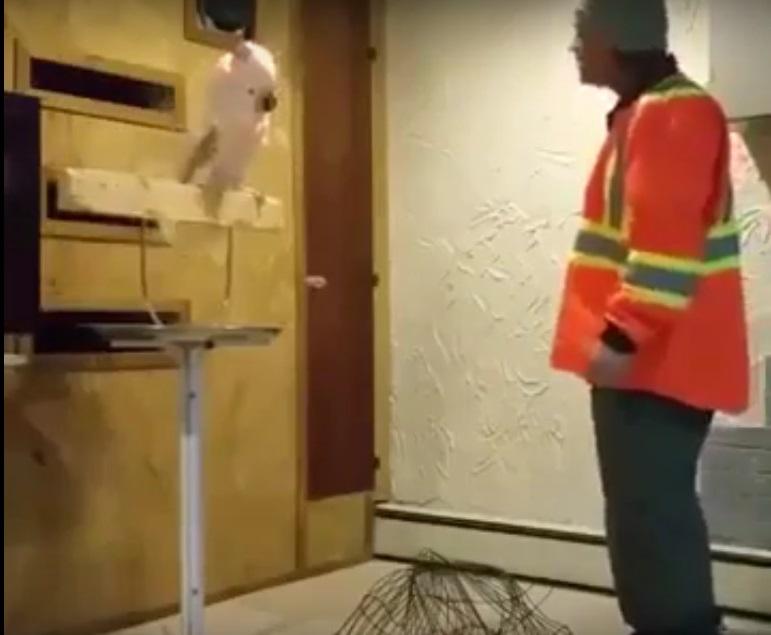 Мережу підкорив відеозапис нервової реакції папуги на знищення клітки для пташок