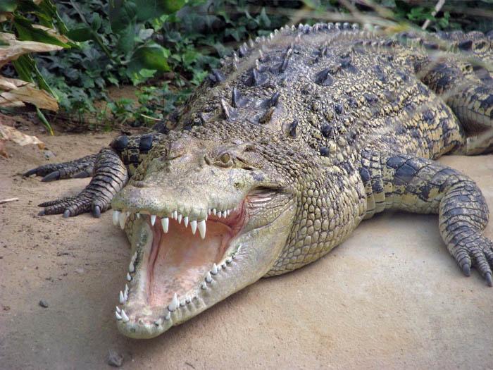 Австралійський пенсіонер три години відбивався від крокодилів гайковим ключем