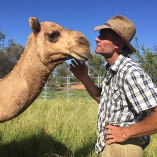 Врятований австралійцем верблюд допомагає йому на кухні