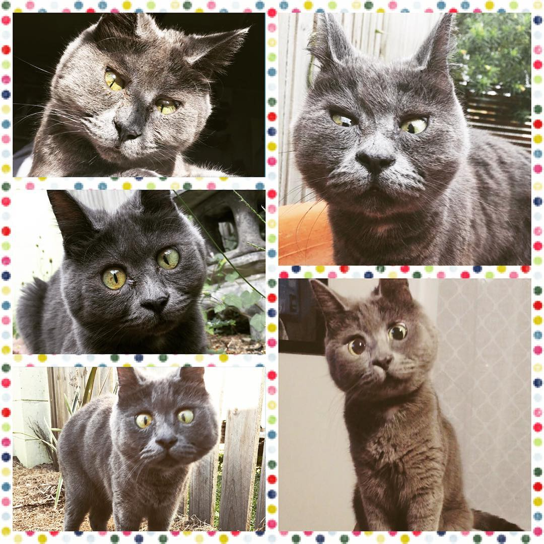 Вічно здивований кіт Кевін став зіркою Instagram
