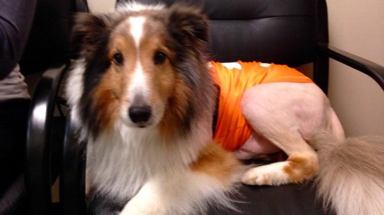 У США ветеринар-стажер врятував собаку за хвилину до усипляння