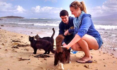 Пляж з котами став туристичним хітом в Італії