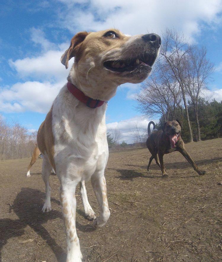 Собака-фотограф стала зіркою Інтернету