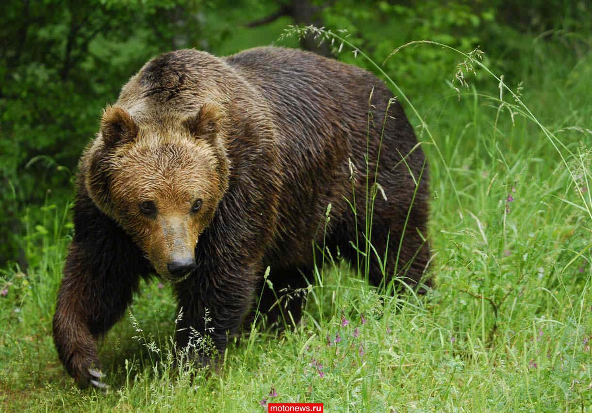 Японське подружжя покарало дитину, залишивши її в лісі з ведмедями