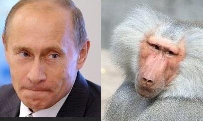 Учені виявили схожість в поведінці політиків і мавп