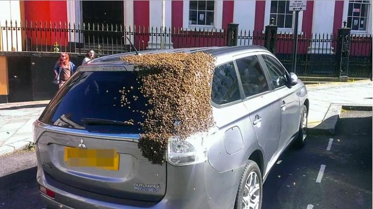 Дві доби рій із 20 тисяч бджіл переслідував авто, в якому застрягла бджолина матка (фото)