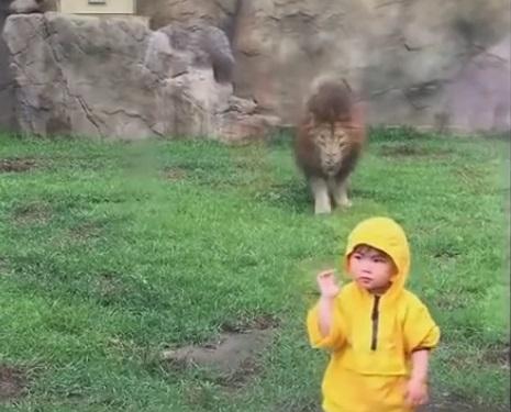 У японському зоопарку лев спробував напасти на маленького хлопчика (відео)