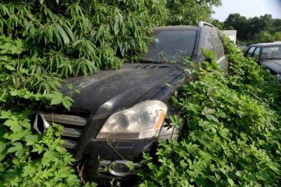 У Китаї на звалищі знайшли Bentley і Land Rover
