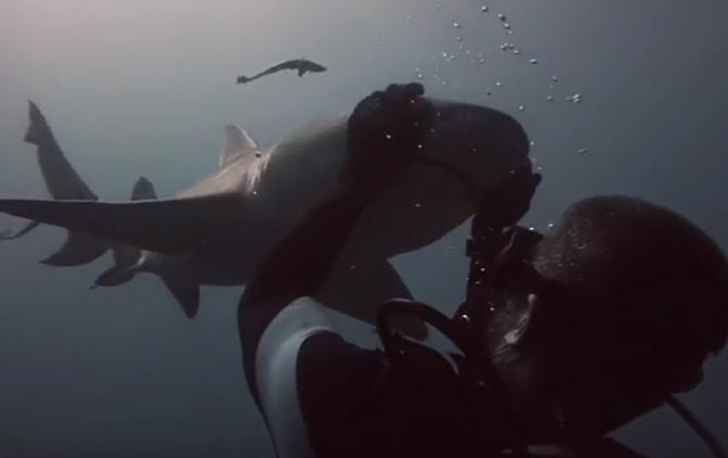 Мережу «підірвало» відео з грайливою акулою, яка «закохалася» в аквалангіста