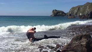 Британець врятував викинутого на берег «дельфіна», який виявився гігантською акулою (відео)