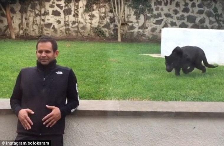 Мережу «підірвало» відео з пантерою, яка кидається на людину… щоб обняти