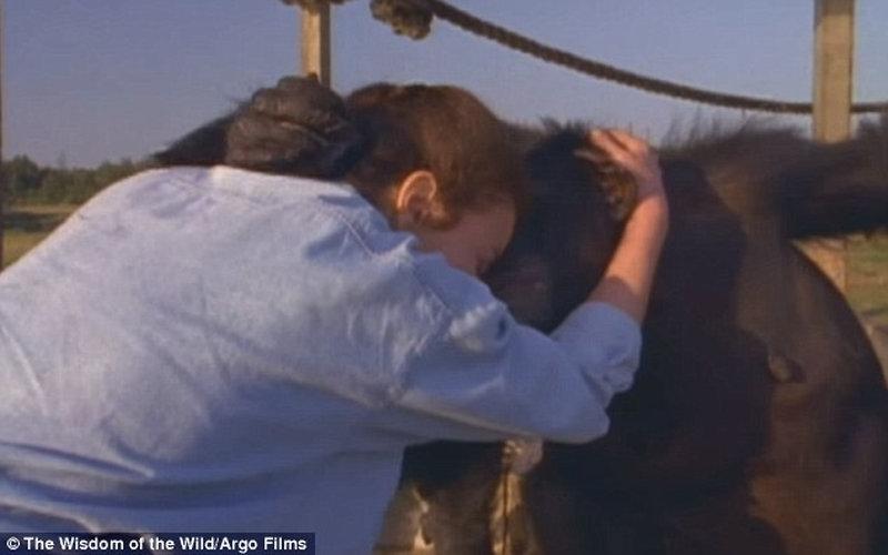Шимпанзе посміхається і обіймає американку, яка врятувала його 25 років тому (відео)