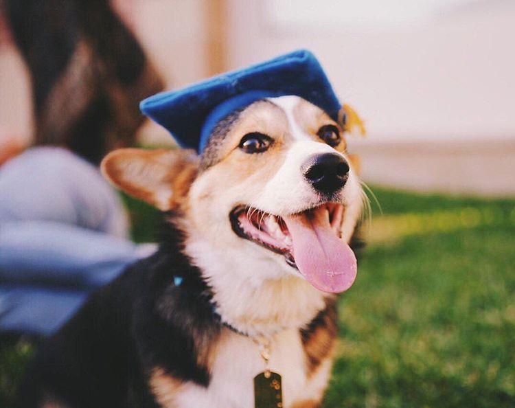Пес на кличку Павлов закінчив університет у США