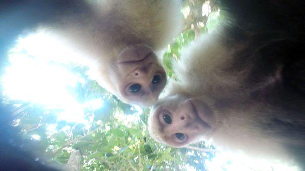 Мавпи вкрали камеру в американського туриста і зробили селфі (фото)