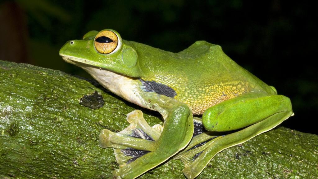 Французьких пенсіонерів зобов'язали засипати ставок у їхньому дворі через надто горлатих жаб