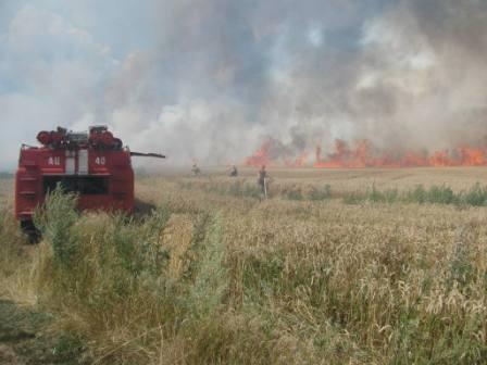 На Волині пожежа знищила 44 га пшениці