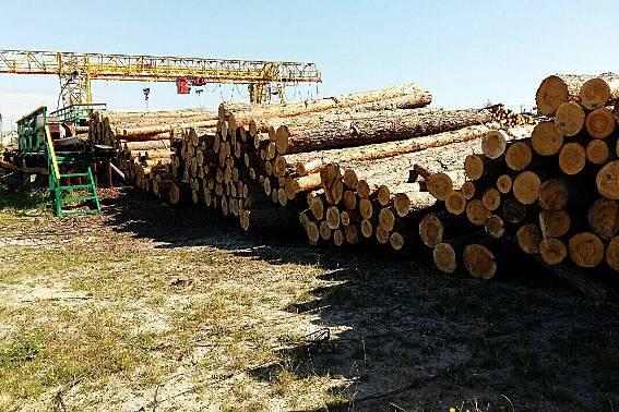 На Волині під прикриттям  управління лісового господарства в області організувалась злочинна група з вирубки лісу і відправки його за кордон