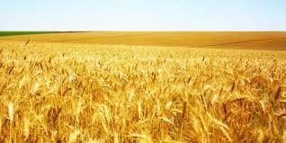 Корейці зацікавлені інвестувати в українські фермерські господарства