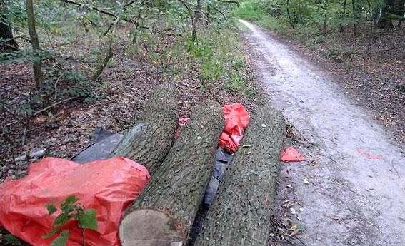На Волині викрили крадіїв лісу
