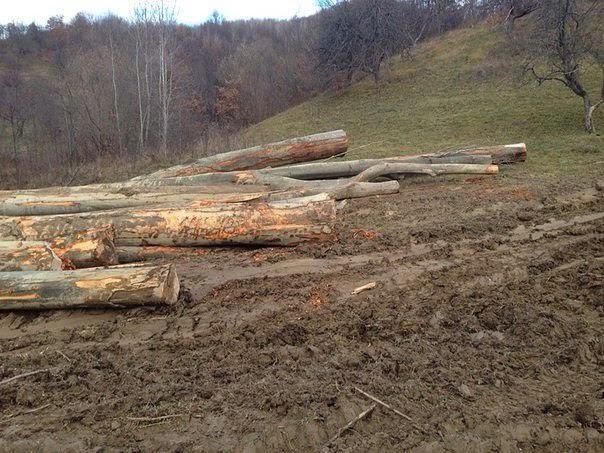 Христина Юшкевич: Суцільні санітарні рубки лісу буде заборонено