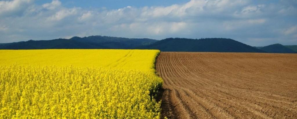 Верховна Рада України продовжила мораторій на продаж землі до січня 2018 року