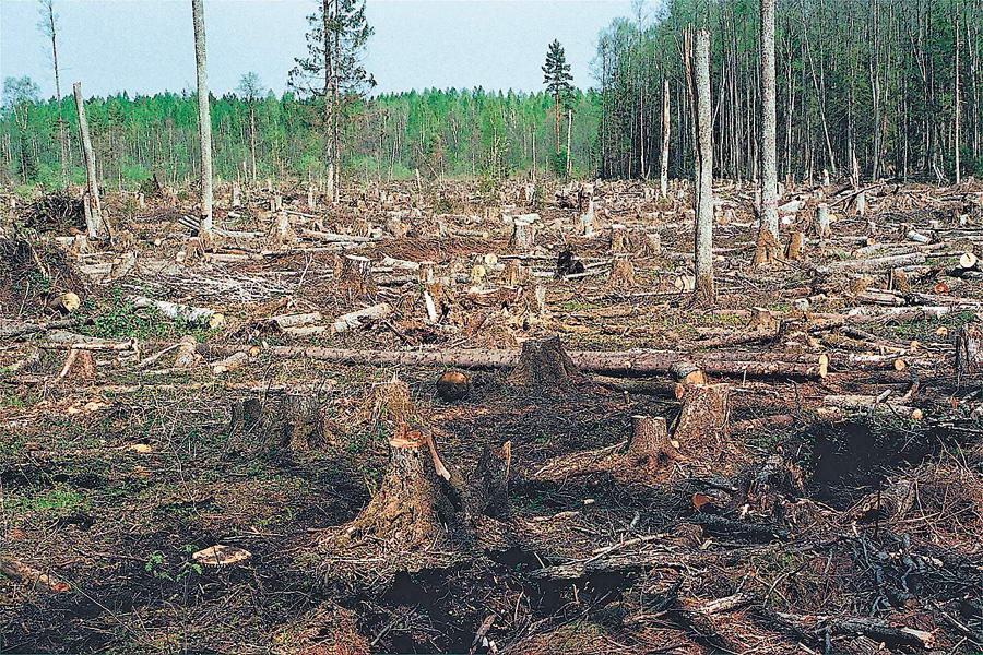 За підробку документів на вирубку лісу судитимуть двох працівників Маневицького лісгоспу