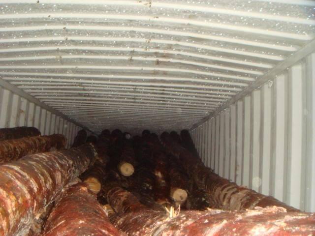 Три тисячі кубів деревини намагалися незаконно експортувати до Європи з Одеського морпорту
