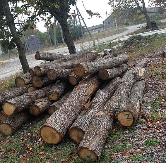 На Тернопільщині заступник начальника лісгоспу організував підпільний лісовий бізнес