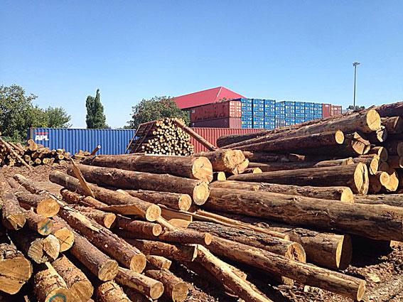 Накрали лісу на 47 мільйонів гривень