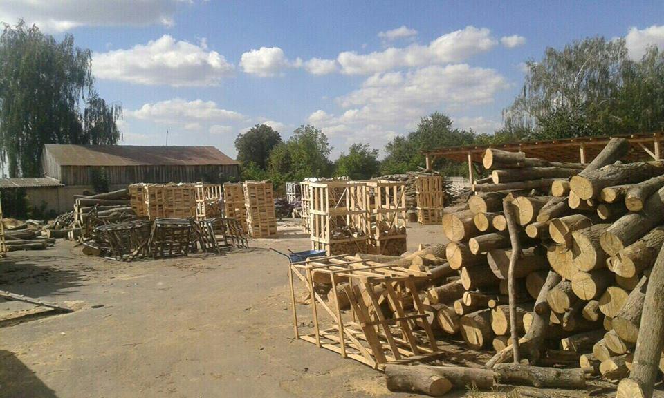 СБУ викрила механізм розкрадання цінних порід деревини у державних лісгоспах Рівненщини
