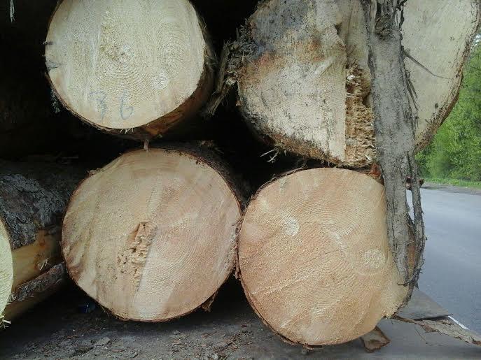 На Закарпатті продавали ліс експортерам за фальшивими документами