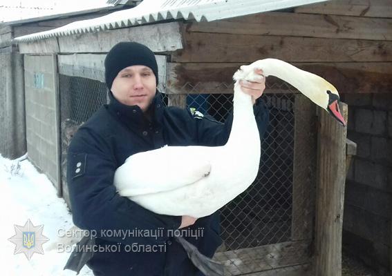 На Волині патрульні врятували лебедя