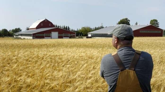 У червні аграрії отримали 473 млн грн дотації