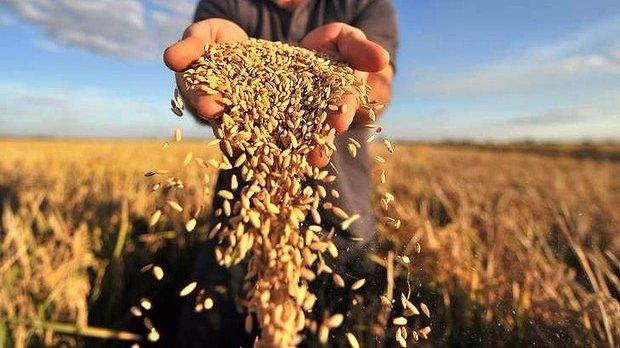 Україна готова до спільного виробництва готової харчової продукції з Білоруссю