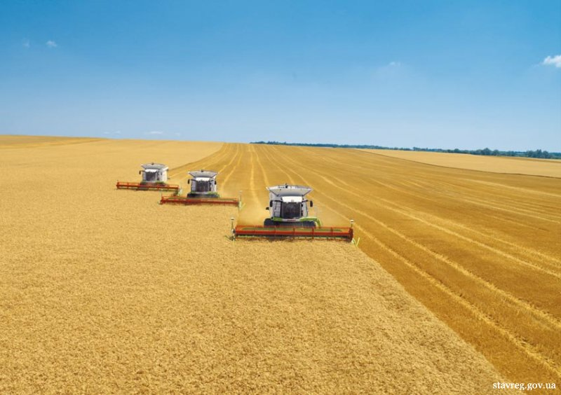 На сьогодні в Україні ранніх зернових зібрано 33,4 млн тонн